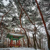 Small pavilion among old trees at Namhansanseong Fortress