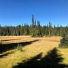 Meadows near Deer Lake