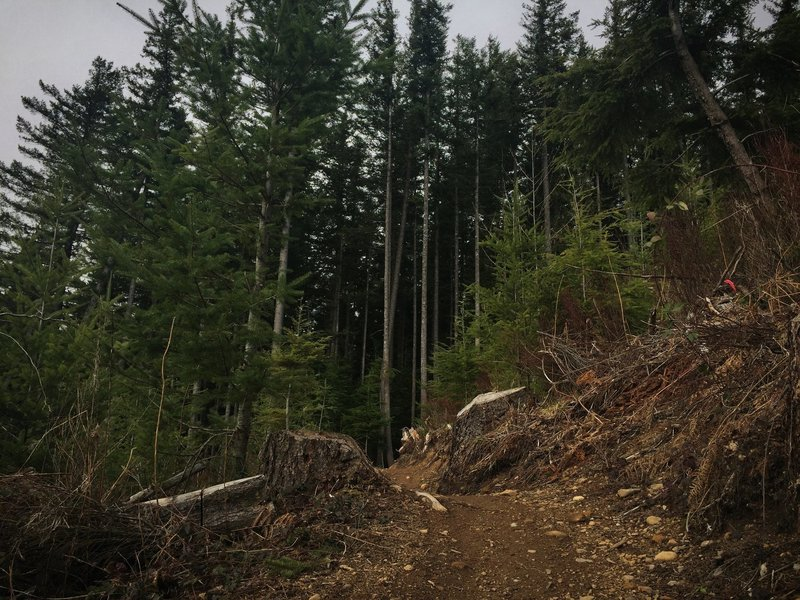 The edge of a clearcut on the Inside Passage trail