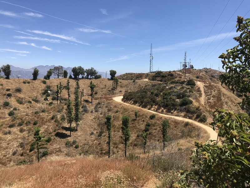 Experimental Forest atop Vital Link Trail