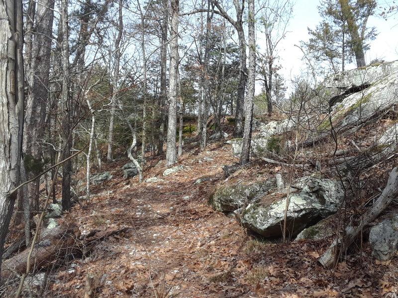 Pine Tree Loop