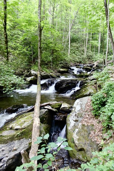 Smith Creek, downstream from Anna Ruby Falls, Georgia