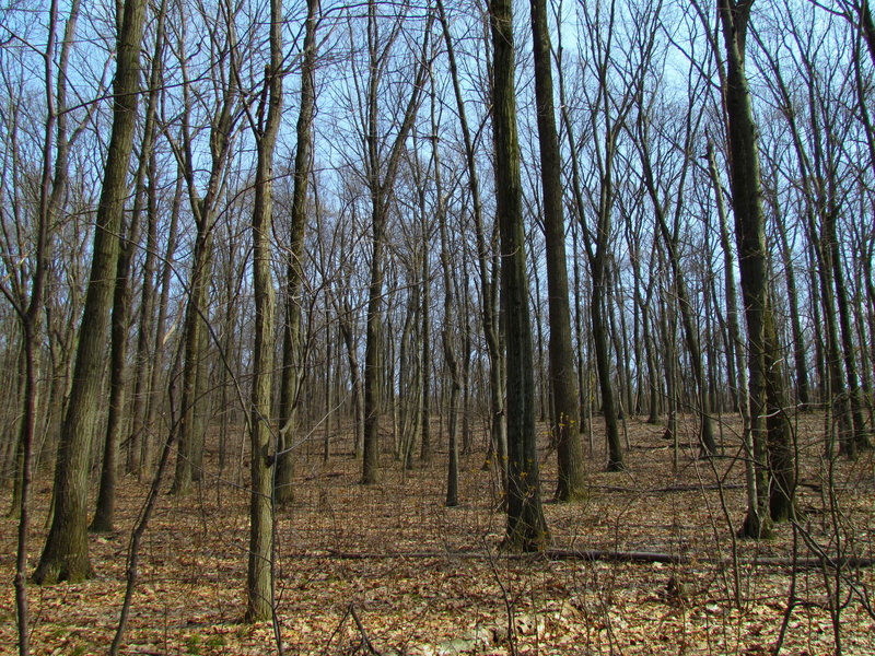 Forest Boyd Big Tree State Park Harrisburg PA 2311