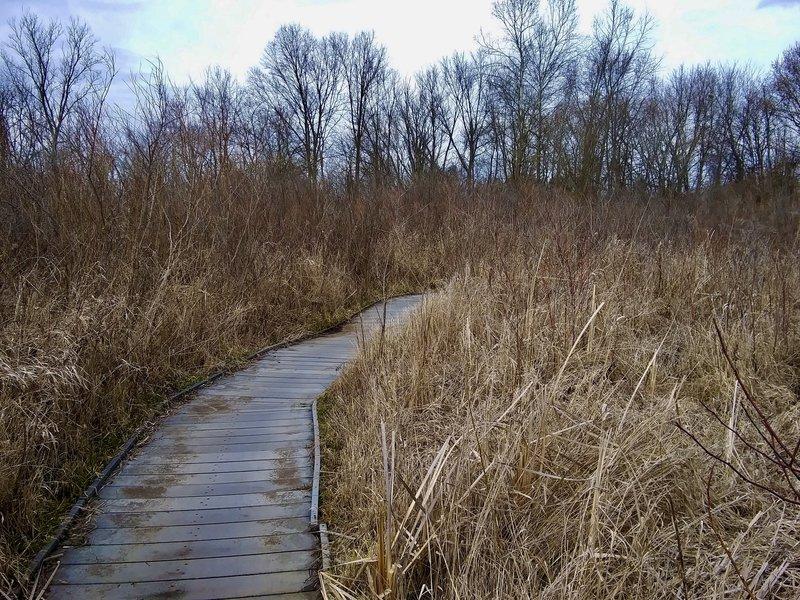 The boardwalk through the fen