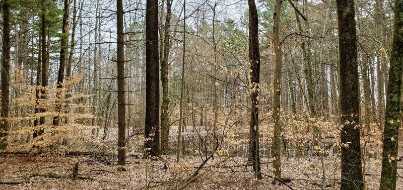 Wildlife pond in the woods