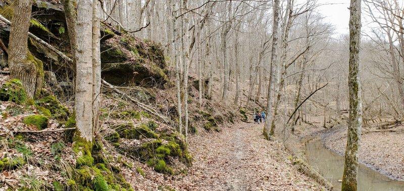 Trail high along the creek bank.