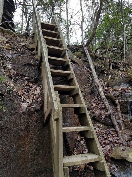 Ladder on the Martha's Pretty Point Trail