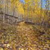 Aspen grove Fall transformation