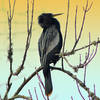 Anhinga at Twilight