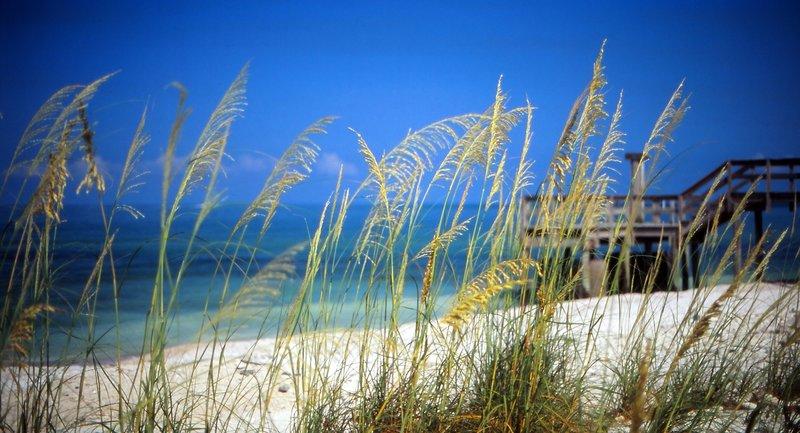 Honeymoon Island Sea Oats