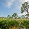 Boyd Hill Nature Preserve