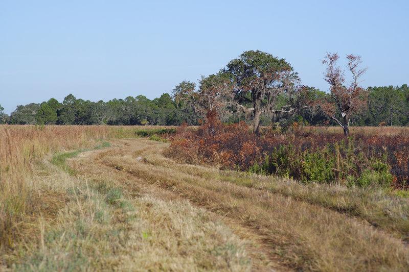 Burn Zone and Trail