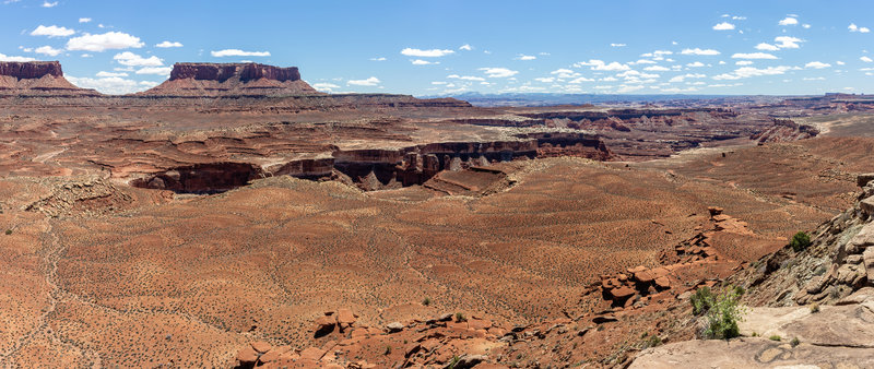 Junction Butte and the White Rim from Murphy Hogback