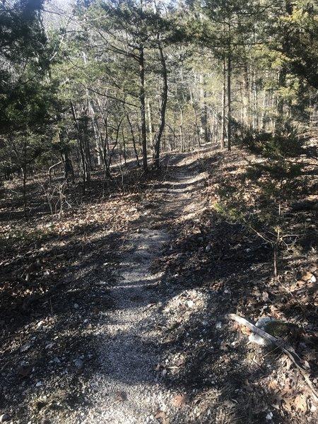 Trail thru cedars