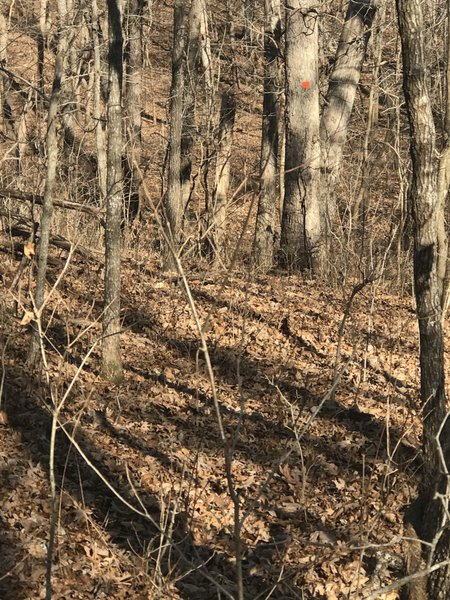 Trail can be a little hard to find with leaves on ground; not always well marked like in this picture