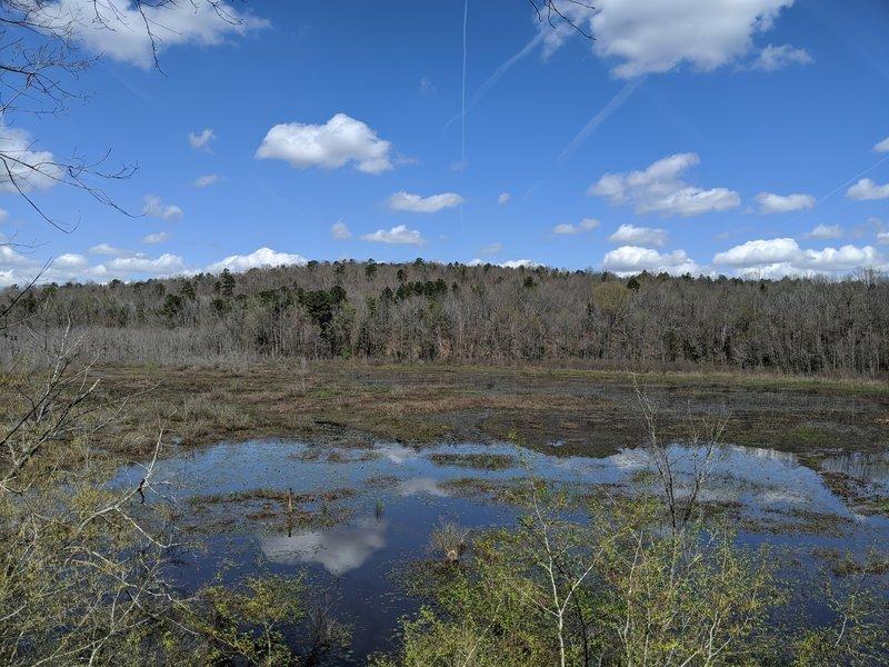 Swampy lowland