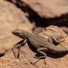 Lizards are abundant near Zeus & Moses