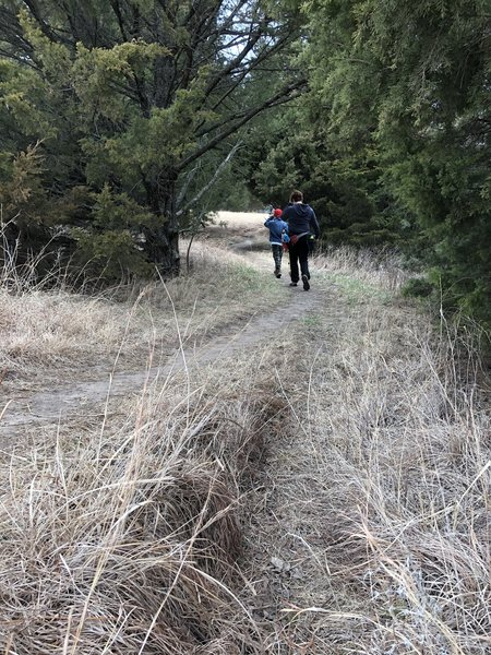 There's a big mix of cedar and deciduous tree sections all over the South trails.