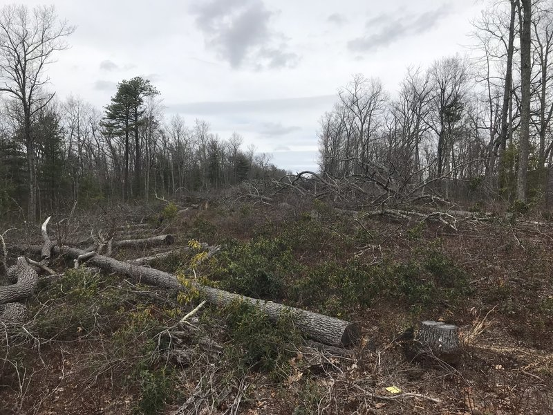 A once pretty trail has been devastated by clear cutting for a gas pipeline, but continued construction is tied up in the courts.