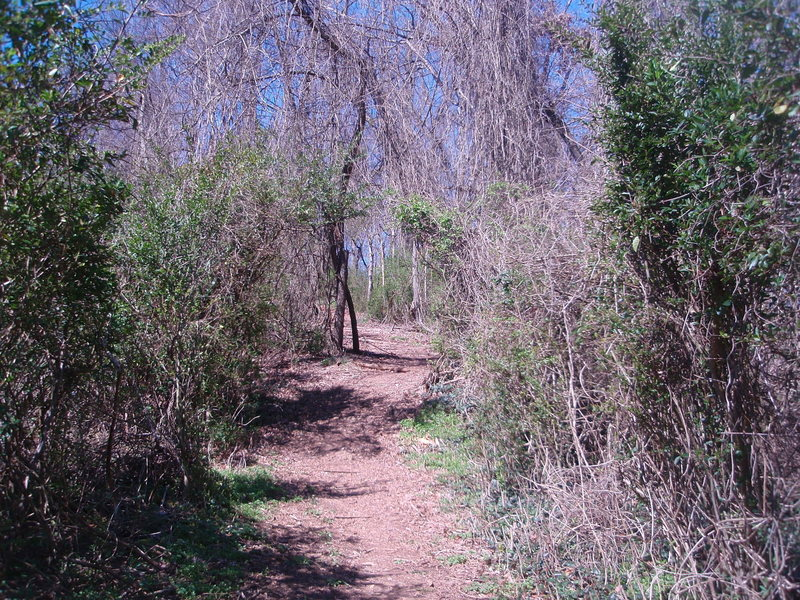 tharp trace trail - a full half mile of straight uphill.