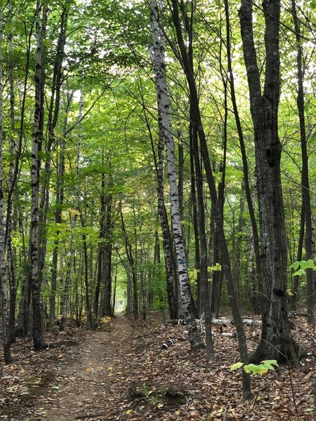 Dorr Mountain Ladder Trail