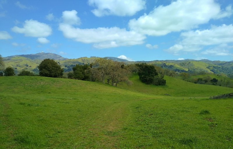The oak studded grass hills of Brush Trail. In the distance, at the left, to the northeast, is Mt. Hamilton, 4,265 ft., with Lick Observatory on its summit.