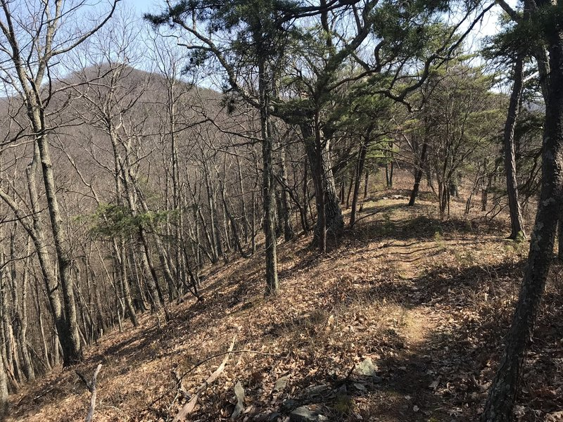 Looking east towards Shenandoah Mountain as the trail climbs.
