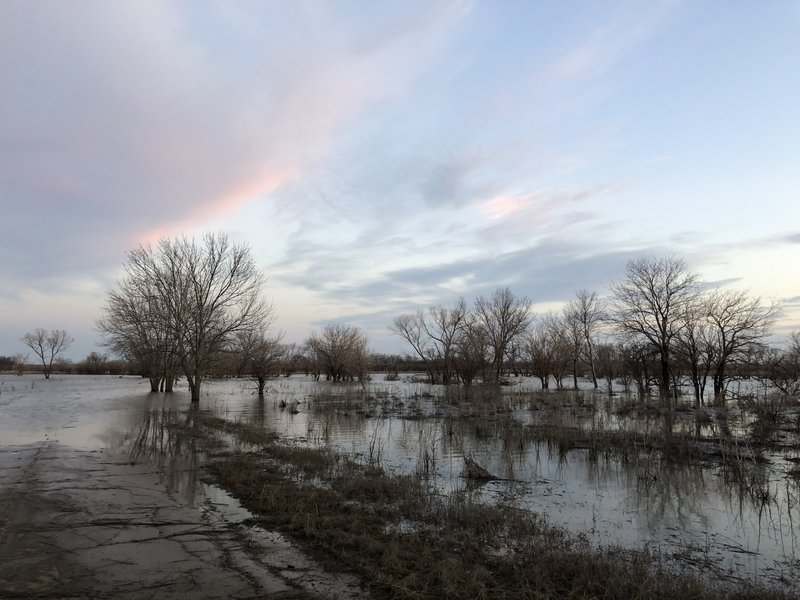 This trail was a road at one point, but when the lake is about five feet above normal, it's lost.
