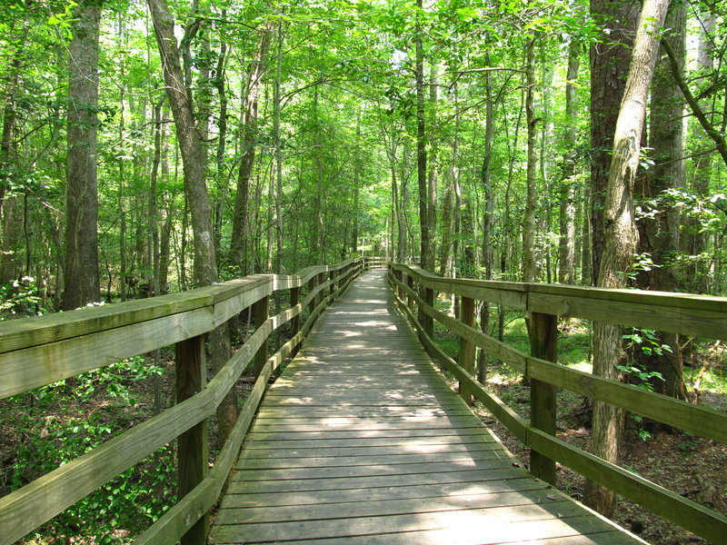 Elevated Boardwalk Trail Congaree National Park