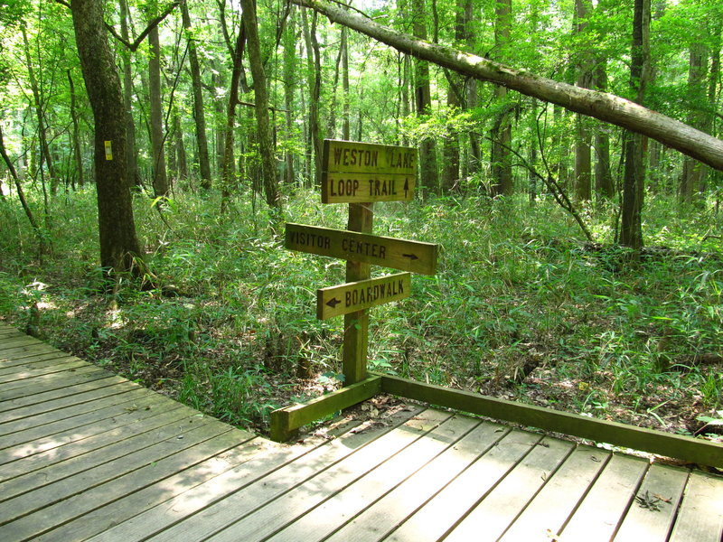 Lower Boardwalk Trail, Congaree National Park