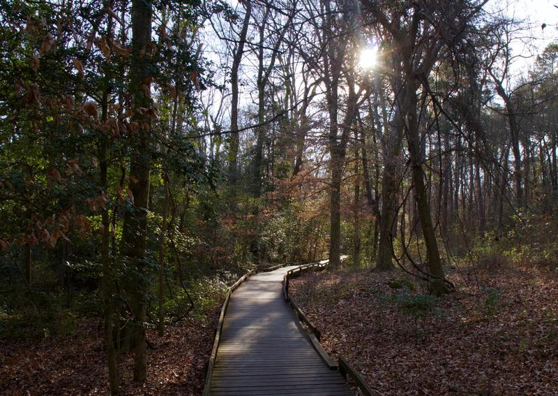 Congaree National Park, South Carolina, USA