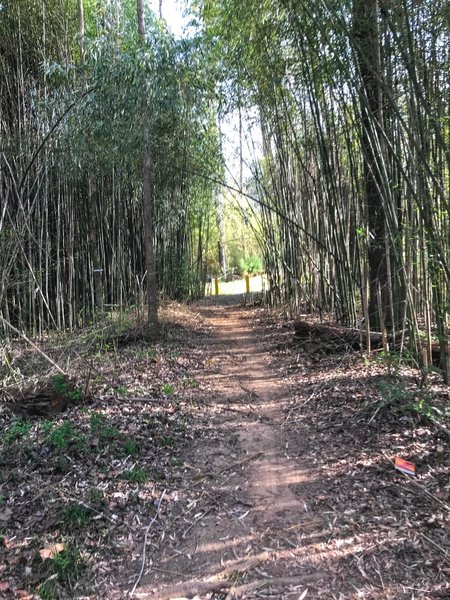 Bamboo tunnel at the intersection of trails