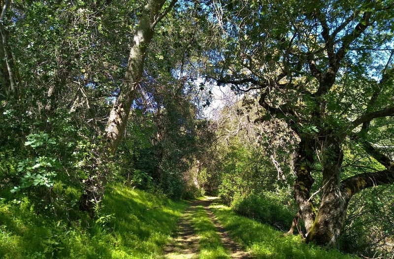 The beautiful thin woods along the northern end of Brush Trail, on a sunny spring day.