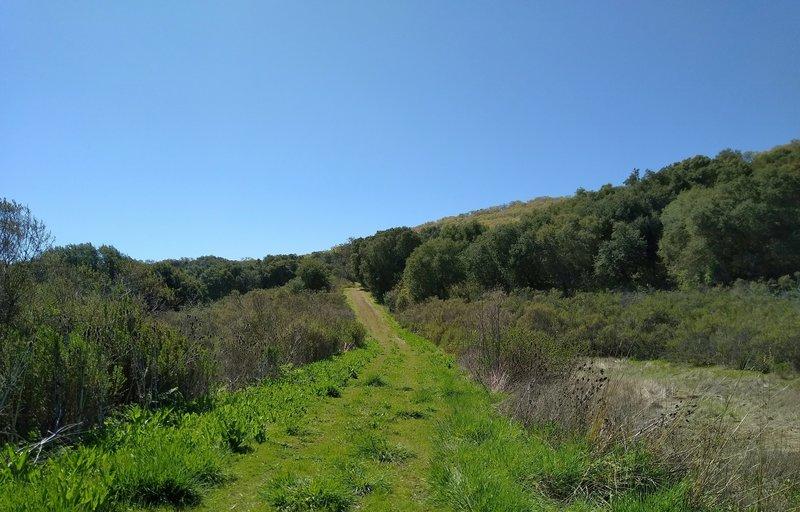 Brush along Brush Trail.