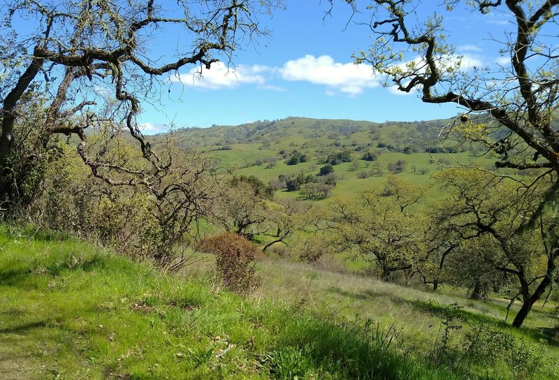 The spring green hills of the Diablo Range are seen across the San Felipe Creek Valley, through a break in the trees along Brush Trail.