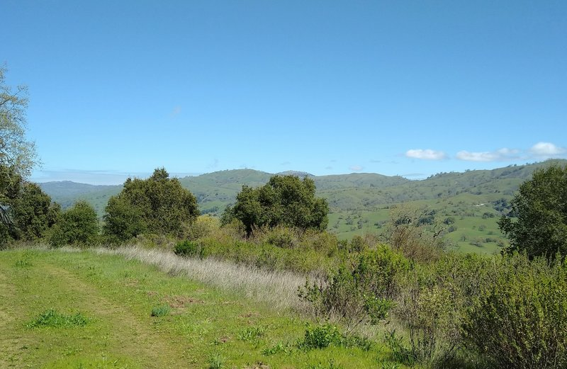 The far reaching extent of the Diablo Range hills can be appreciated from high on Brush Trail, looking north, past the brush.