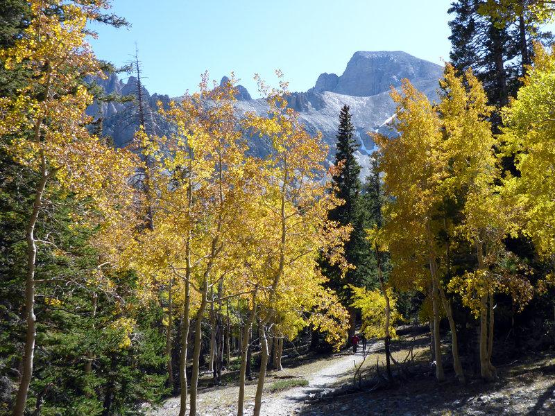 Wheeler Peak and aspens