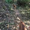 Pups on singletrack