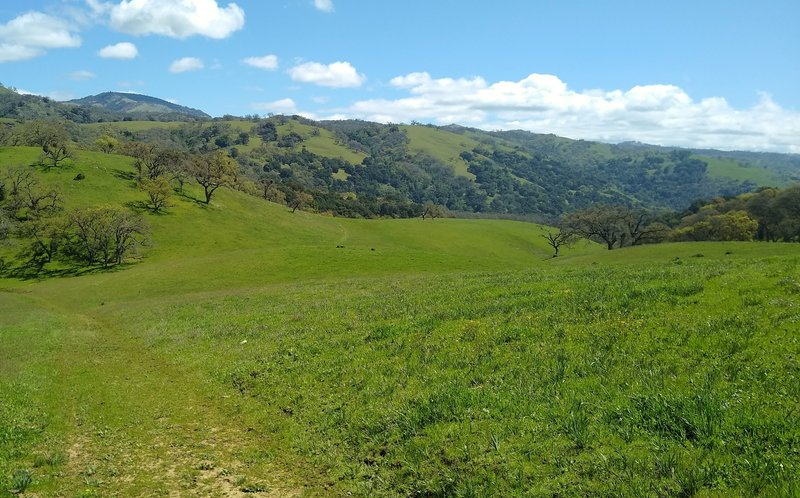 The spring green hills deep in the Joseph D. Grant County Park backcountry near the Canada de Pala Trail start. The trail is faint here as it goes through the grass meadows.