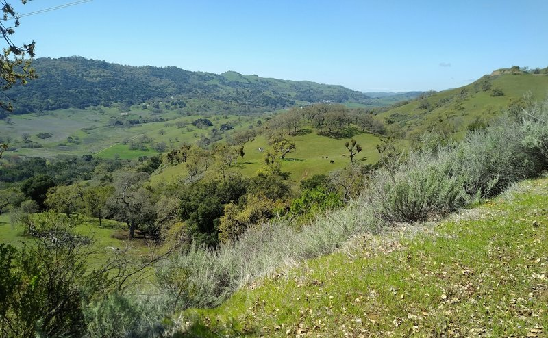 Views of the broad San Felipe Creek Valley, and grass and wooded hills to the west-northwest, from high on Canada de Pala Trail, as one approaches Mt. Hamilton Rd. from the south.