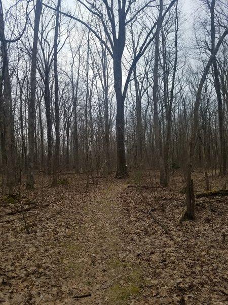Sceneca Trail