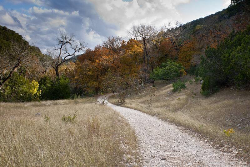 Path Through The Maples