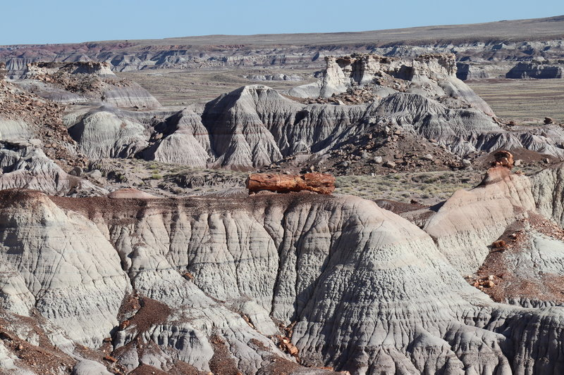 Petrified Logs in top of badlands