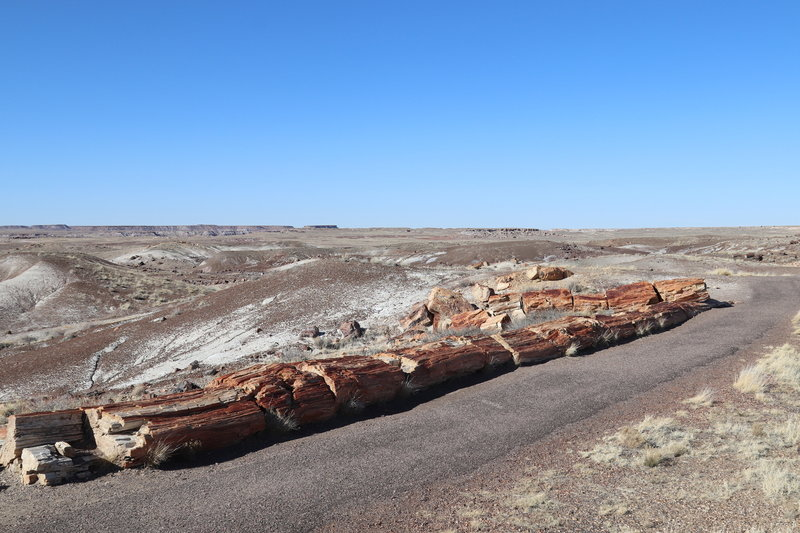Line of petrified log across Crystal Forest trail