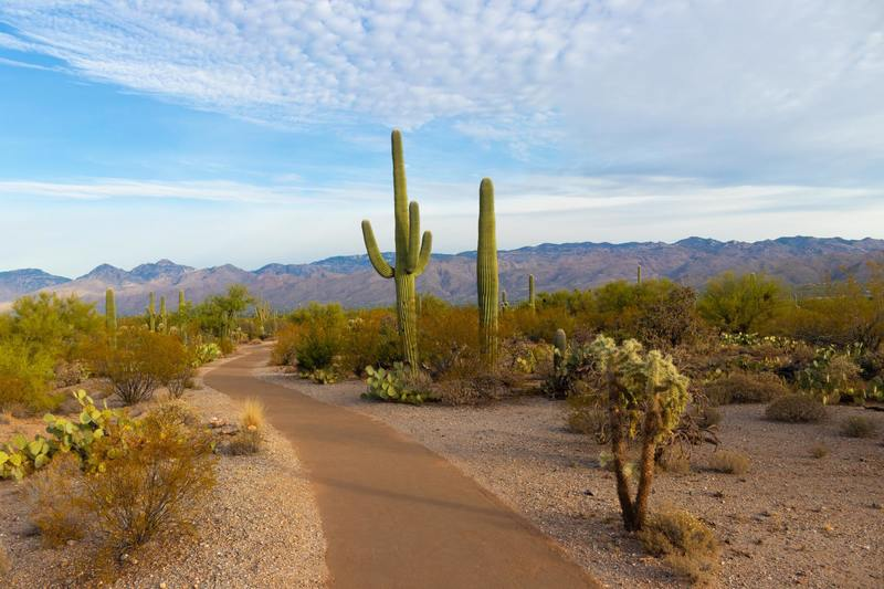 Saguaro National Park, United States