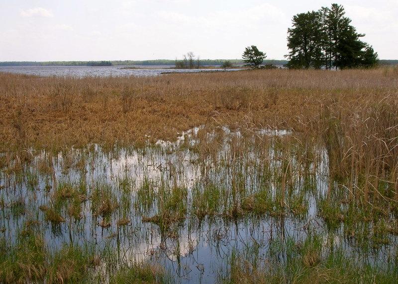 Sky Reflected in Marsh