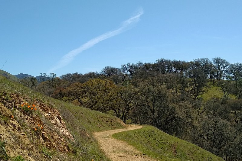 Bonhoff Trail winds through the grass and thin woods, high in the Diablo Range of Joseph D. Grant County Park.