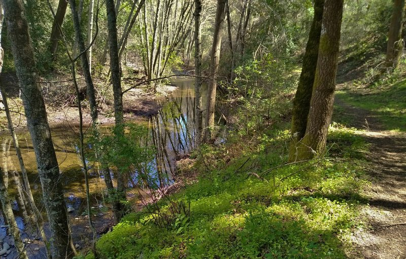 Smith Creek is a pretty little creek in the Joseph D. Grant County Park backcountry. It is visited by Smith Creek Trail.