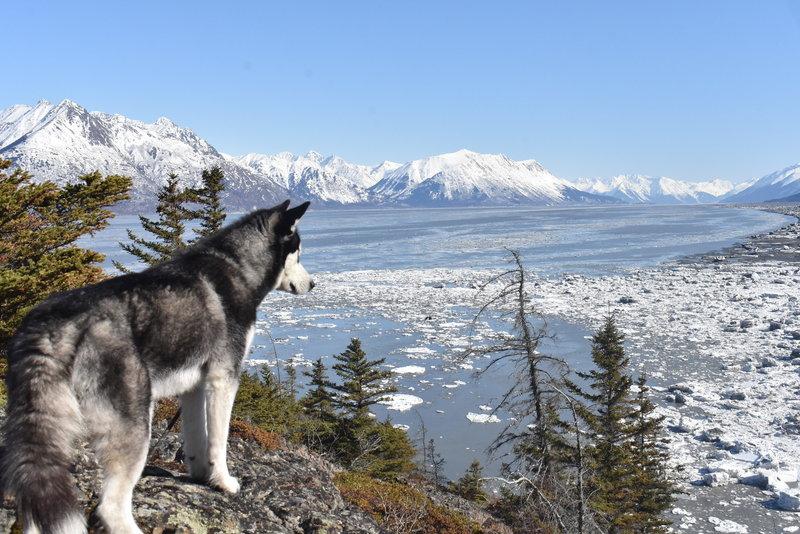 Yukon and the Turnagain Arm from Gull Rock (Hope, AK)