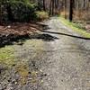 Azalea trail Bartlett Arboretum